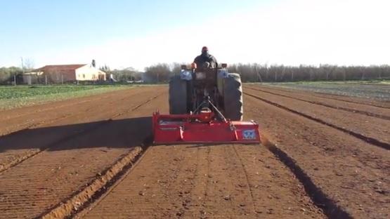 Preparem la terra per sembrar les patates